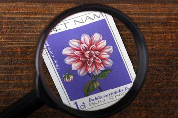 Vietnam - circa 1982: a stamp printed in Vietnam. Shows pink dahlias, about 1982 on a brown wooden table close up under a magnifying glass