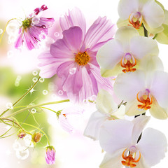 Lily and orchid.Flower background