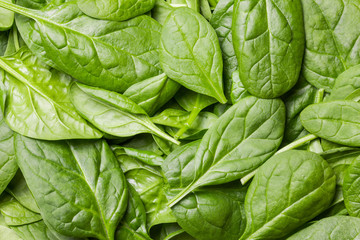 Fresh green baby spinach leaves.