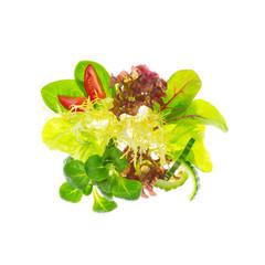 Gemischter bunter, sommerlicher Blattsalat