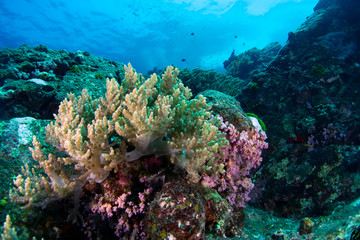 Beautiful reefscape of Similan islands.Thailand.
