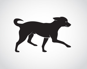 Vector image of an dog on white background. Chihuahua Puppies