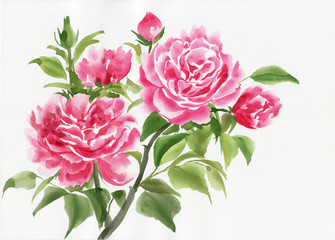 Pink rose bush original watercolor painting on white background