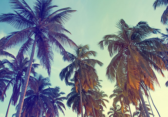 Tropic palms, toned photo