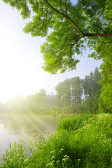 Green forest with Pond. Sunny day in spring landscape.