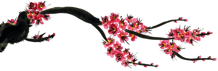 A branch of a blossoming tree. Pink flowers of sakura . Watercolor painting. Isolated on white background.