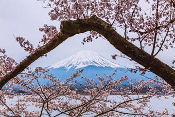 Mt.Fuji with Cherry Blossom at Lake kawaguchiko, Japan