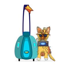 cat the explorer