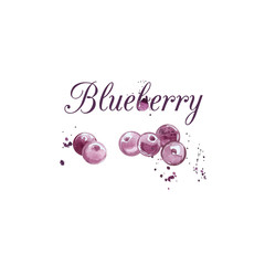 Watercolor Blueberry illustration.
