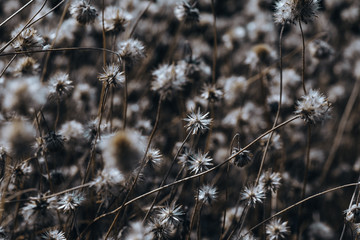 Dramatic lighting with dried flower closeup