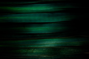 Fond composé de grandes feuilles d'agave vertes trés sombres alignées horizontalement