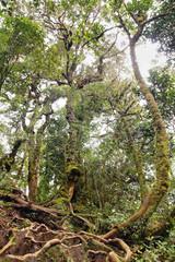 Lianas winding through the rainforest.
