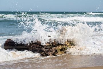 Baumstamm wird von einer Welle erfasst