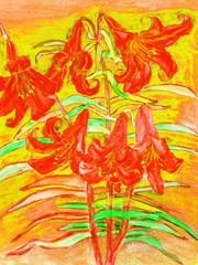 Red lilies, hand drawn painting