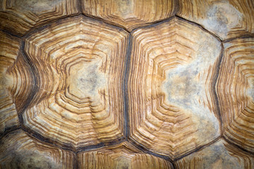Closeup of a turtle shell