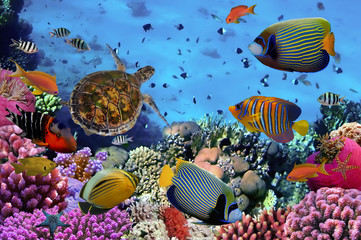 Aluminium Prints Under water colorful coral reef with many fishes