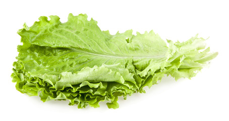 leaves of lettuce