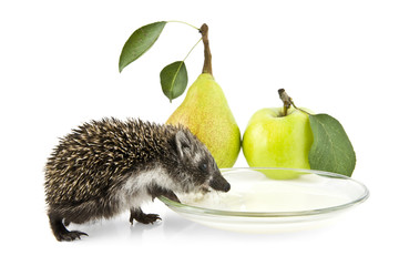 hedgehog drinking milk, pear and apple