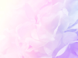 Flower background 22