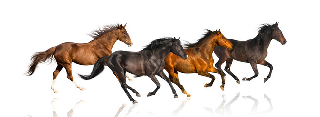 isolate of four galloping horse on the white background