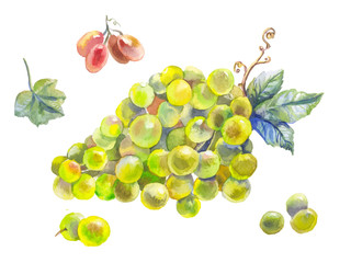 set of grapes watercolor