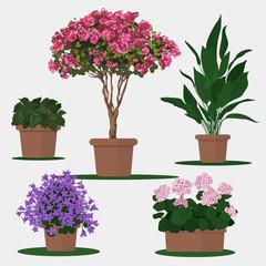 Vector flat illustration of plants in pots.