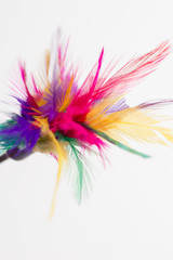 Feathered toy for cats over white background