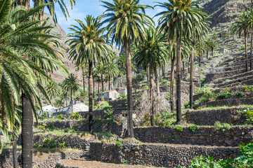 Terraced fields is a typical landscape for the Valle Gran Rey, the beautiful canyon on the Canary island La Gomera. The terraces are still used for agriculture. The valley is located on the west side