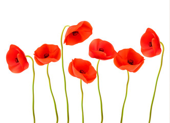 Fototapete - Nature background with red poppies. Vector.