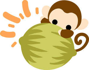 A pretty monkey and a big coconut