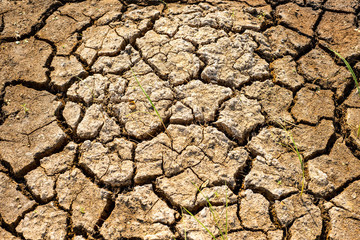 Cracks in the dried soil in arid season