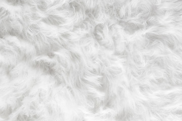 Sheep wool fur background texture wallpaper. Wall mural