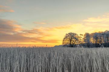 Tree silhouette on a frosty field