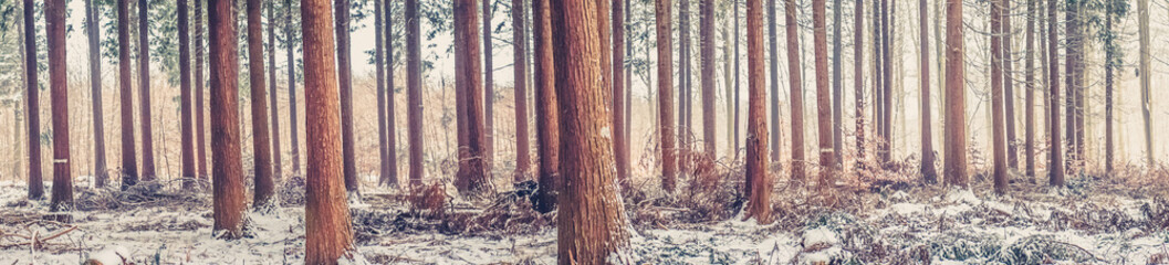 Trees at wintertime in the forest