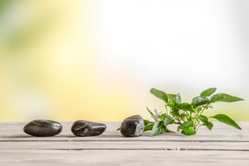 Black stones and a flower on a table