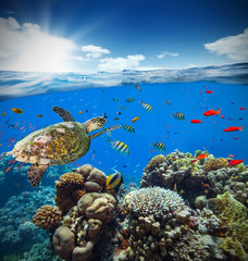 Photo sur Aluminium Sous-marin Underwater coral reef with horizon and water surface