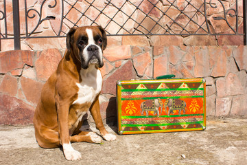 Dog and colorful retro suitcase