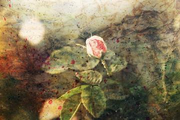beautiful pink rose and watercolor splatter