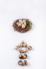 Quail eggs in the form of arrows indicate the nest with quail eggs.