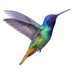 Hummingbird - Golden tailed sapphire.