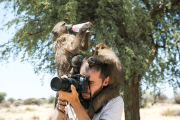 Namibia, photographer taking pictures with three baby baboons on his shoulders