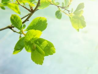 Spring new leaf