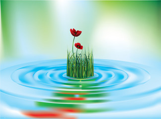 poppy and grass reflecting in the water