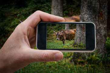 photographing on phone from (photographing the landscape) photos from your phone, selfie, photographing on the phone,