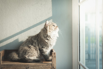 cat looking out through a window
