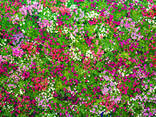 full decorated wall with the colorful fresh flowers