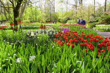 Fototapete - Scenic of Keukenhof Tulips Garden, Lisse, Netherlands.