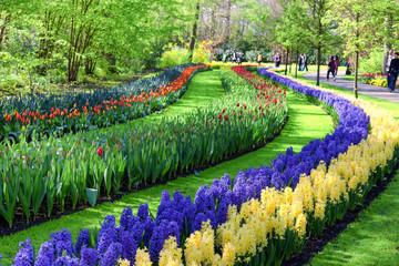 Fototapete - Spring Flowers in Keukenhof Garden, Netherlands