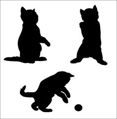 silhouette of an amusing kitten vector.