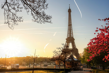 Fototapete - Eiffel Tower with spring tree in Paris, France
